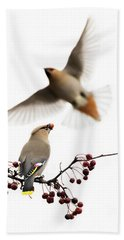 Beach Sheet featuring the photograph Bohemian Waxwings by Mircea Costina Photography
