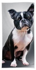 Boston Terrier By Spano Beach Towel by Michael Spano