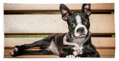 Boston Terrier Puppy Relaxing Beach Towel by Stephanie Hayes