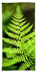 Botanical Fern Beach Towel