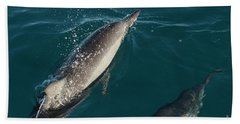 Bottle Nose Dolphin Beach Towel