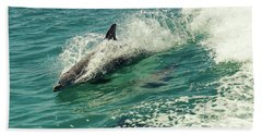 Bottlenose Dolphin Beach Towel