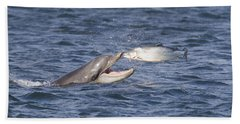 Bottlenose Dolphin Eating Salmon - Scotland  #36 Beach Sheet