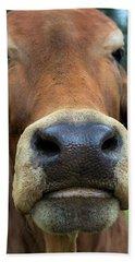 Brahman Cattle Closeup Portrait Beach Towel