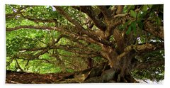 Branches And Roots Beach Sheet by James Eddy