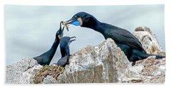 Brandt's Cormorant Feeding Family Beach Towel