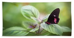 Beach Towel featuring the photograph Brave Butterfly  by Cindy Lark Hartman
