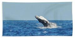 Breaching Humpback Off Bermuda Beach Sheet