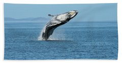 Breaching Humpback Whales Happy-3 Beach Towel