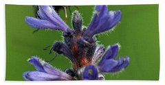 Beach Sheet featuring the photograph Bumble Bee Breakfast by Glenn Gordon