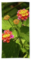Bright Cluster Of Lantana Flowers Beach Towel
