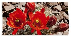 Beach Towel featuring the photograph Bright Orange Cactus Blossoms by Phyllis Denton