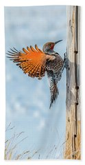 Brilliant Northern Flicker Woodpecker Beach Sheet by Yeates Photography