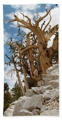 Bristlecone Pine 6 Beach Sheet