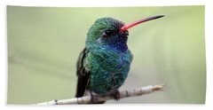 Broad-billed Hummingbird Portrait Beach Sheet
