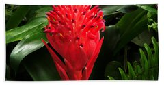 Bromeliad 9-18-15 Beach Towel