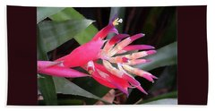 Bromeliad  Beach Sheet