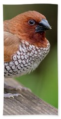 Beach Towel featuring the photograph Brown Bird by Raphael Lopez
