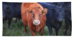 Brown Cow Beach Towel by Craig J Satterlee