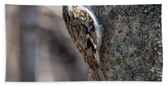 Beach Towel featuring the photograph Brown Creeper  by Ricky L Jones