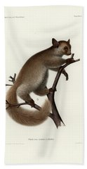 Brown Greater Galago Or Thick-tailed Bushbaby Beach Towel