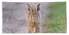 Brown Hare Approaching Down Track Beach Towel