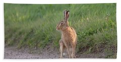 Brown Hare Listening Beach Towel