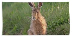 Brown Hare Sat On Track At Dawn Beach Towel