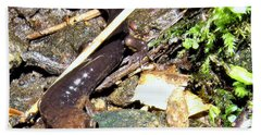 Brown Head Salamander Beach Sheet