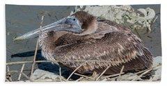 Brown Pelican 3 March 2018 Beach Sheet