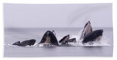 Bubble Feeding Humpbacks Beach Towel by Darcy Michaelchuk
