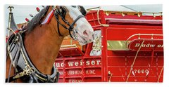 Budweiser Clydesdale In Full Dress Beach Sheet by Bill Gallagher
