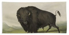 Buffalo Bull Grazing 1845 Beach Towel
