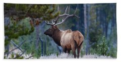 Bull Elk In Forest Beach Towel