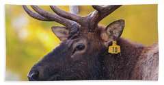 Bull Elk Number 10 Beach Towel