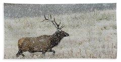 Bull Elk With Snow Beach Towel