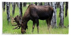 Bull Moose In The Woods  Beach Sheet