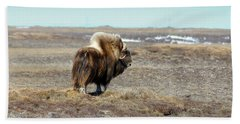 Bull Musk Ox Beach Sheet by Anthony Jones