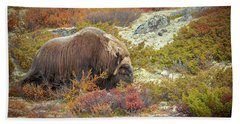 Bull Musk Ox Grazing Beach Towel