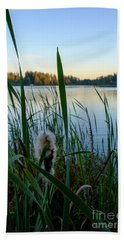 Bulrush And September Evening Beach Towel