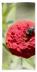 Bumble Bee On Zinnia Beach Sheet