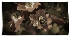 Bumblebee On Blush Country Rose In Sepia Tones Beach Towel