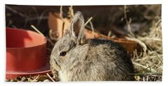Bunny In The Garden Beach Towel