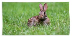 Beach Towel featuring the photograph Bunny Rabbit by Andrea Silies