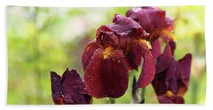 Burgundy Bearded Irises In The Rain Beach Towel by Rona Black