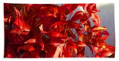 Burning Bush In Snow Enchantment Beach Towel by Anastasia Savage Ealy
