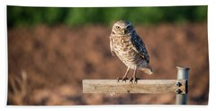 Burrowing Owl On A Perch Beach Sheet