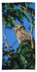 Burrowing Owl Sitting In A Tree Beach Towel