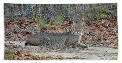 Beach Towel featuring the photograph Bushed Bobcat by Al Powell Photography USA