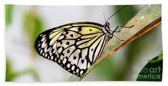 Butterfly #1945 Beach Sheet by Chuck Flewelling